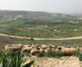 The Cost of Environmental Degradation in Jordan