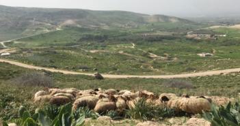 The Cost of Environmental Degradation in Jordan