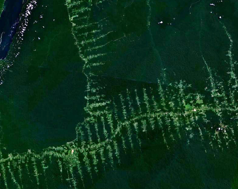 Deforestation in the Amazon as seen by satellite (by NASA, via Wikimedia Commons).