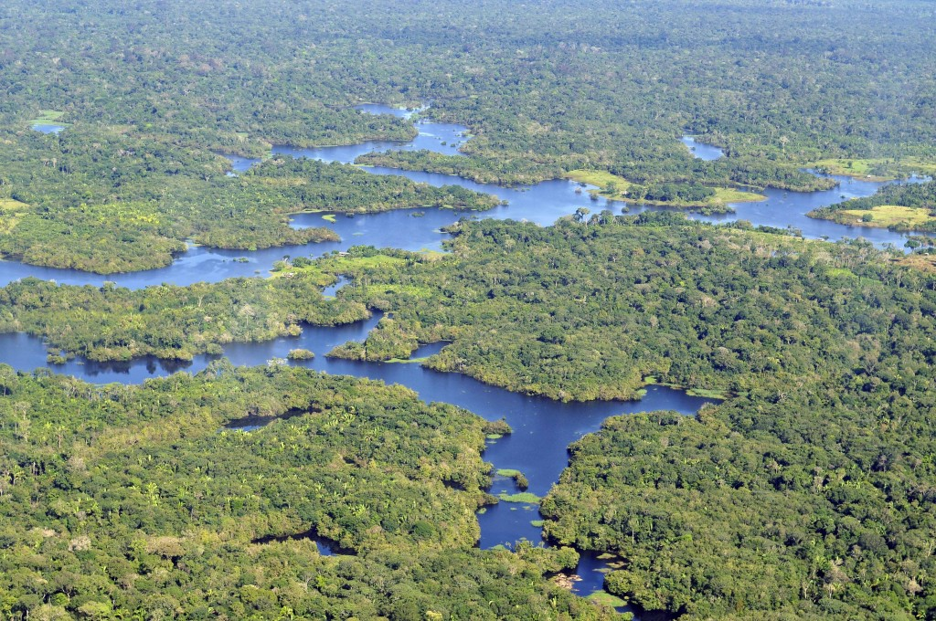 The Amazon Rainforest, which spans over 2 million square miles, houses one of the most abundant Carbon stores in the world. It is also rich in natural minerals, which is why the forest is heavily exploited within the boundaries of Peru. (Neil Palmer/CIAT/Wikimedia Commons)